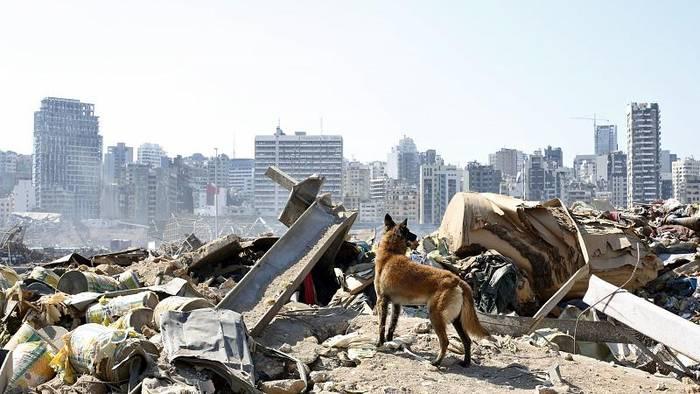 News video: Schwierige Suche nach Überlebenden in Beirut - Rund 100 Vermisste