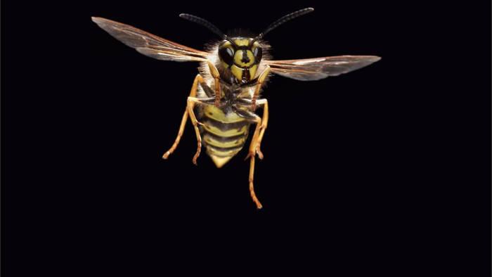Video: Die besten Tipps gegen lästige Wespen