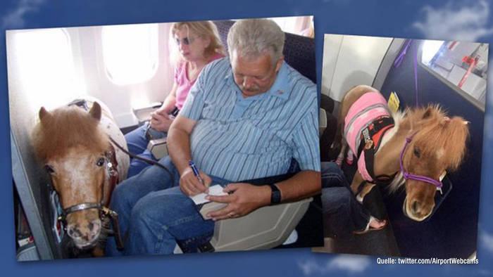 Video: Pferd im Flugzeug? In den USA offenbar kein Problem