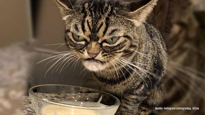 """Video: Neue """"Grumpy Cat"""" macht ihrem Ruf alle Ehre"""