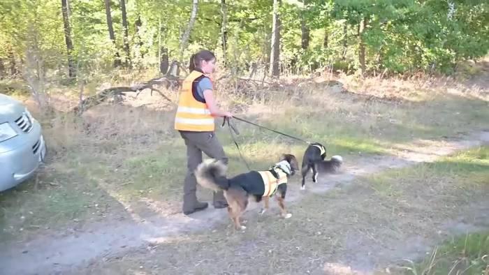 News video: Mit Hundesuchstaffeln gegen die Schweinepest