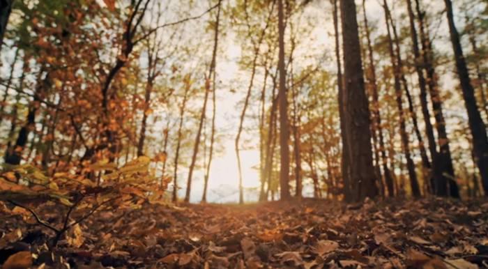 News video: Wer hätte das gedacht? Faszinierende Fakten über den Herbst