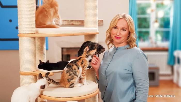 News video: Was tun bei Katzenzoff? Expertin Birga Dexel gibt Tipps