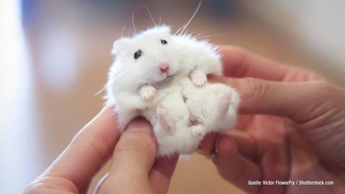 News video: Studie belegt: Videos von Tierbabys vermindern Stress!