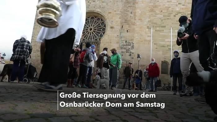 Video: Segen für Haustiere vor dem Osnabrücker Dom