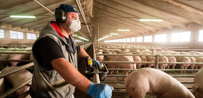 Video: Neues Coronavirus auf Menschen übertragbar: Schweineerreger aus China beunruhigt Forscher