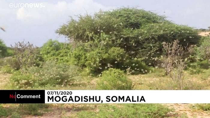 News video: Somalia: Heuschrecken-Plage könnte Hungersnot auslösen