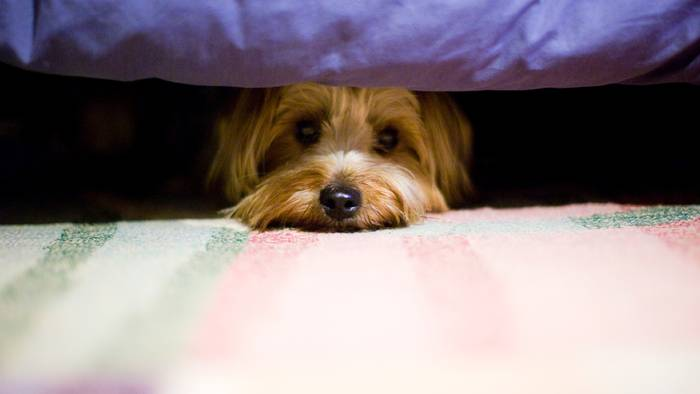 News video: Mit diesen alternativen Möglichkeiten hat euer Hund am Silvesterabend keine Angst mehr