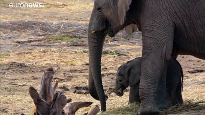 News video: Namibia verkauft 170