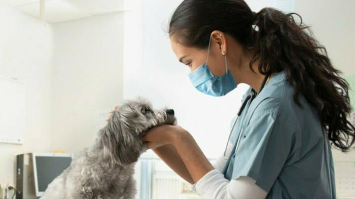 News video: Corona-Impfung: Nicht nur Hunde und Katzen beim Tierarzt?