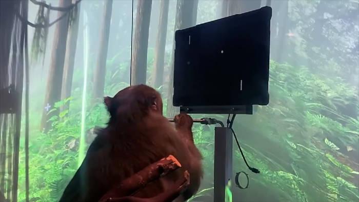 News video: Elon Musks Neuralink: Affe steuert Videospiel - mit seinen Gedanken