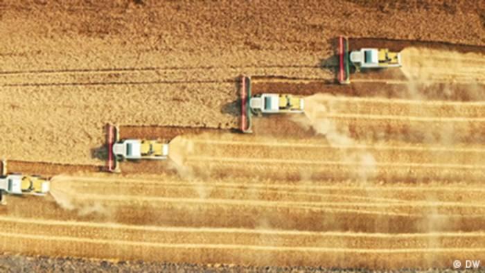Video: Saatgutvielfalt in Gefahr