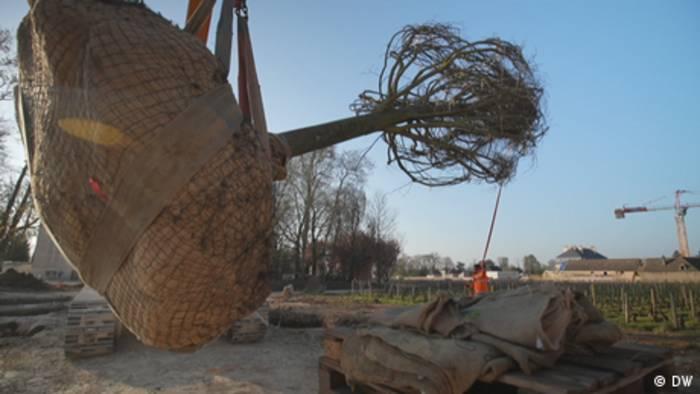 News video: Wenn riesige Bäume auf die Reise gehen