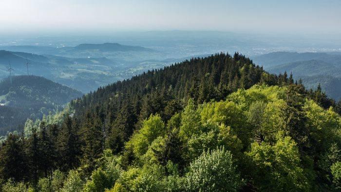 News video: Das können Sie für den Schutz der Wälder tun