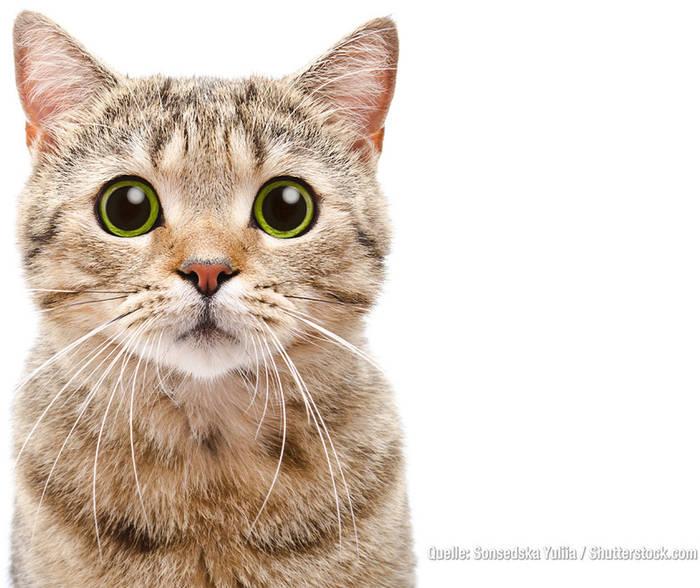 Video: Sind Katzen süßer als Hunde? DAS sagt eine neue Studie