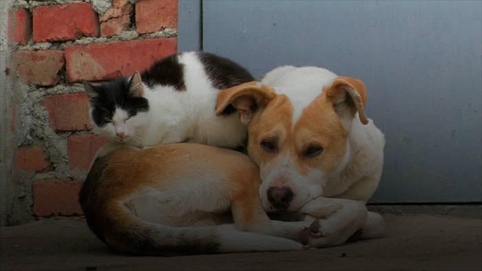 News video: Wie Hund und Katze? So werden unsere liebsten Vierbeiner Freunde