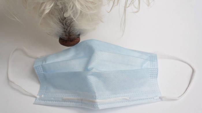 Video: Richtiger Riecher fürs Virus: Mit Hunden gegen Corona-Ausbreitung