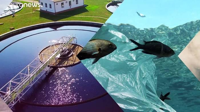 News video: Munition im Meer: Gefährliche Altlasten in der Nord- und Ostsee
