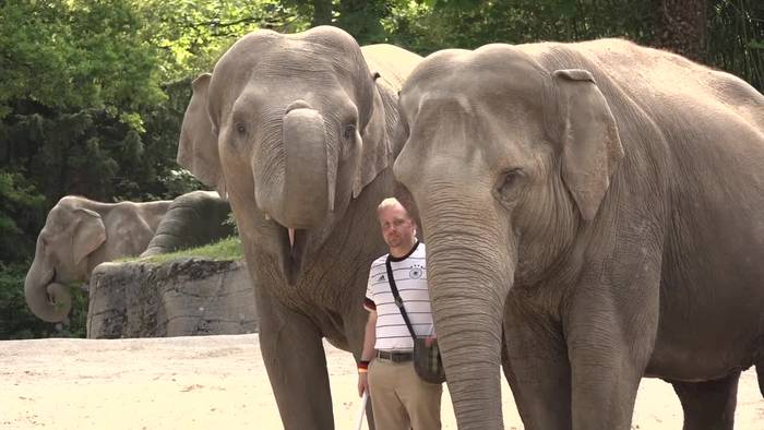 News video: Tierpark Hagenbeck: Elefantenorakel zur Europameisterschaft