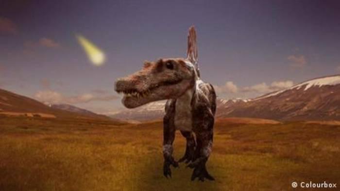 News video: Welche Tiere haben die Dinosaurier überlebt?