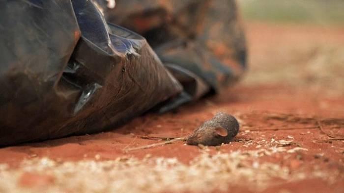 News video: Mäuseplage in Australien