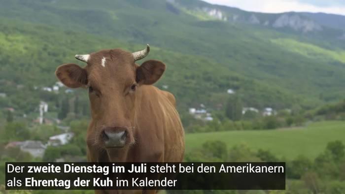 News video: Ku(h)rios! Kühe haben einen Ehrentag