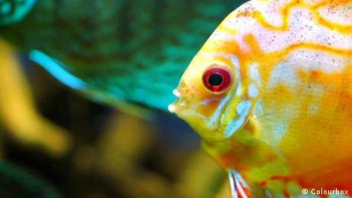 News video: Wie sehen Fische im Wasser?