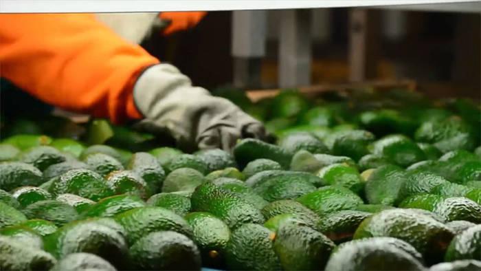 News video: Superfoods: Diese Lebensmittel helfen beim Fettabbau