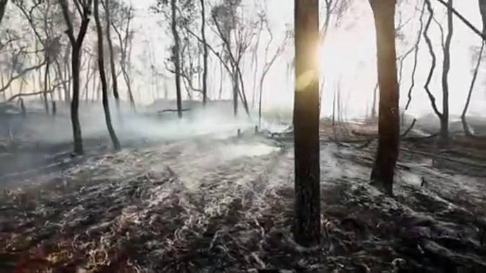 Video: Brasilien befürchtet Welle von Waldbränden