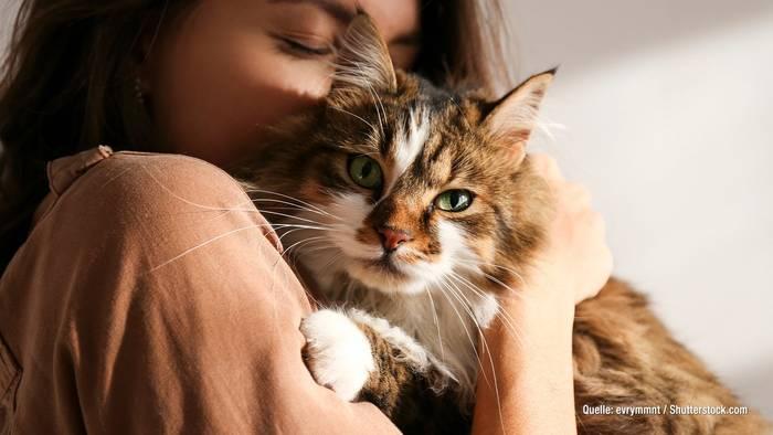 News video: Wohin mit der Katze im Urlaub? Mit einem Sitter klappt's!