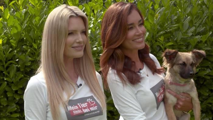 Video: Jana Ina Zarrella & Mirja Du Mont: Im Einsatz für Corona-Haustiere