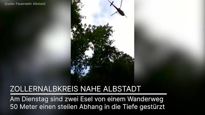 Video: Dramatische Rettung: Zwei Esel mit Helikopter geborgen