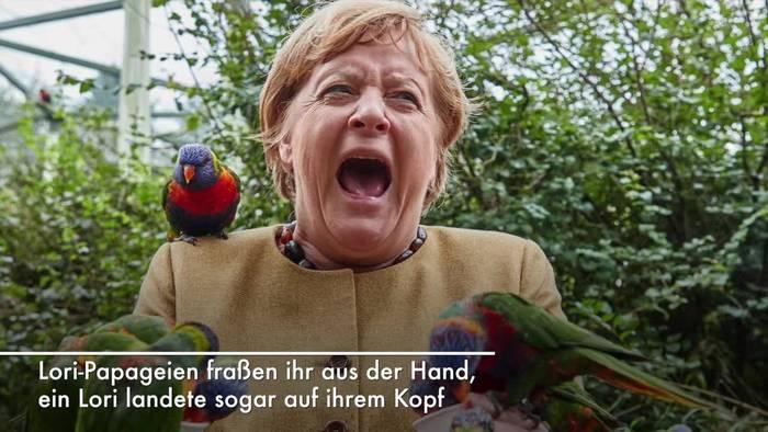 News video: Kanzlerin im Vogelpark: Nur beim Uhu sagt Merkel «Nein»