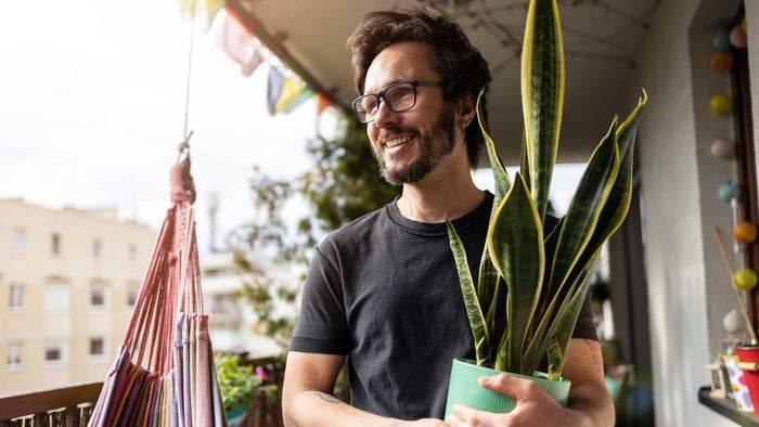 News video: Praktisch unverwüstlich: Zimmerpflanzen, für die Sie keinen grünen Daumen brauchen