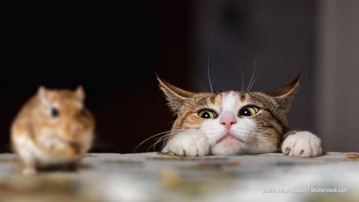 News video: Katze bringt Mäuse mit nach Hause: DARUM sind sie kein Geschenk