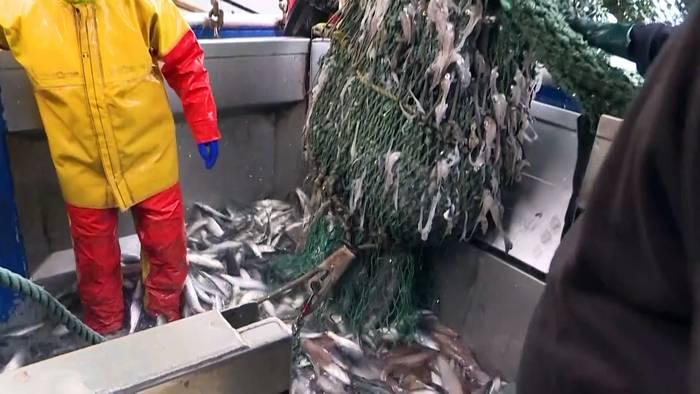 Video: Keine Lizenz zum Fischen: Französische Fischer verzweifeln