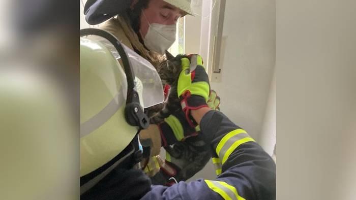 Mauzen aus der Wand: Feuerwehr rettet Katze aus Schornstein